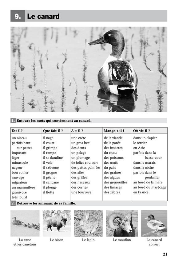 Eveil et vocabulaire : les animaux (CP-CE)