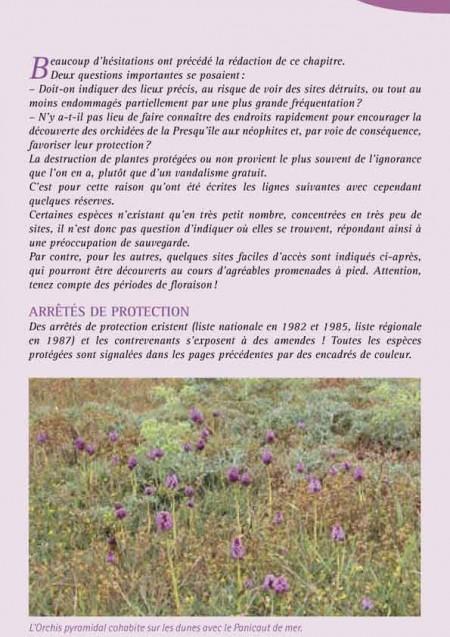 Orchidées en Presqu'île de Crozon